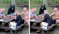 Ormana Piknik Yapmaya Giden Ailenin Masasına Misafir Olan Ayı