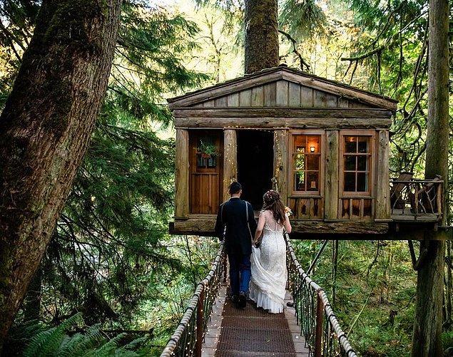 6. Ağaç ev, Washington