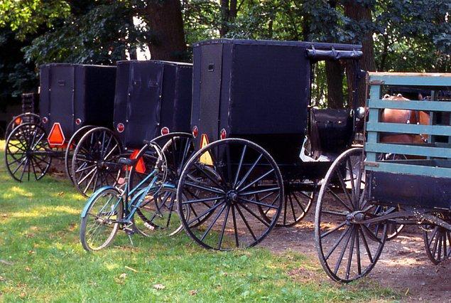2. Amişler motorlu araba kullanmazlar. Ancak onları gezdirmek isteyenlerin araçlarına ya da tren ve otobüslere binerler.