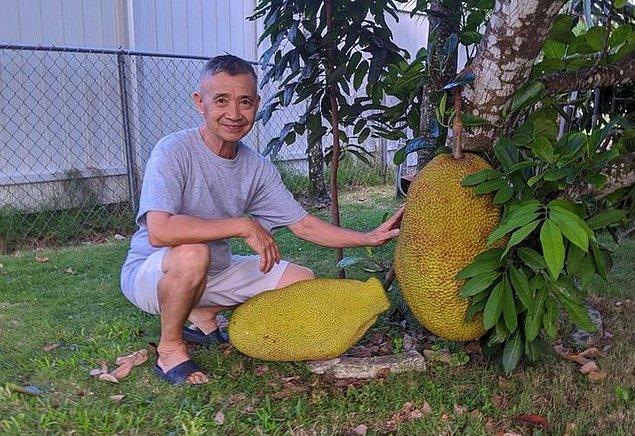 """7. """"68 yaşındaki babam yaklaşık 20 kilo ağırlığındaki yetiştirdiği meyvesinden gurur duyuyor."""""""
