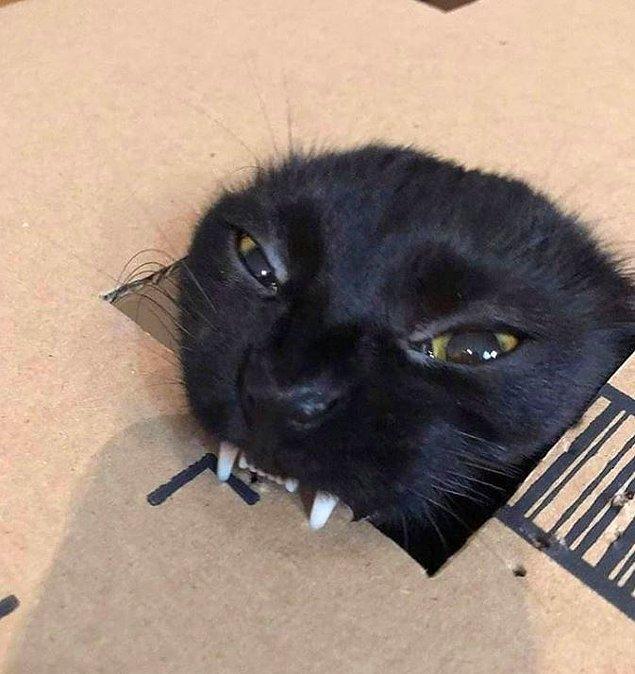 3. Vampir kedi.