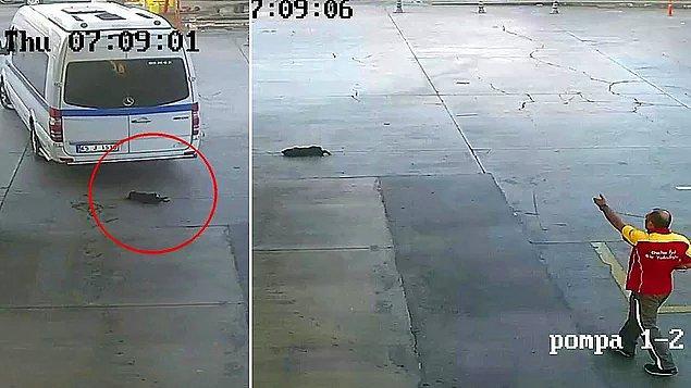 10. 'Onun geçmesini mi bekleyecektim?' diyerek yavru köpeği öldüren şahıs, adli kontrol şartıyla serbest bırakıldı...