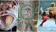 Doğanın Korkutucu Yüzünü İliklerinize Kadar Hissetmenize Sebep Olacak Birbirinden Ürkütücü 19 Yeni Fotoğraf