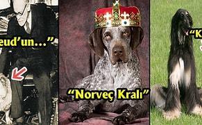 Sevgili Yoldaşlarınızın Zekasını, Cesaretini ve Sevecen Doğasını Bir Kere Daha Hatırlatacak Koca Bir Alkışı Hak Etmiş 13 Köpek