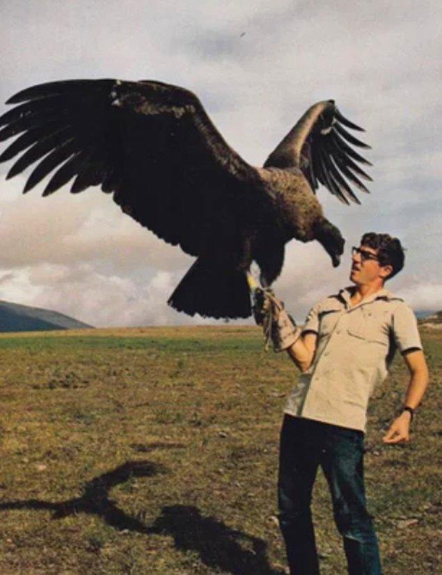 6. California Condor'un 304 cm kanat açıklığı var ve 4.572 m yüksekliğe ulaşabiliyor.