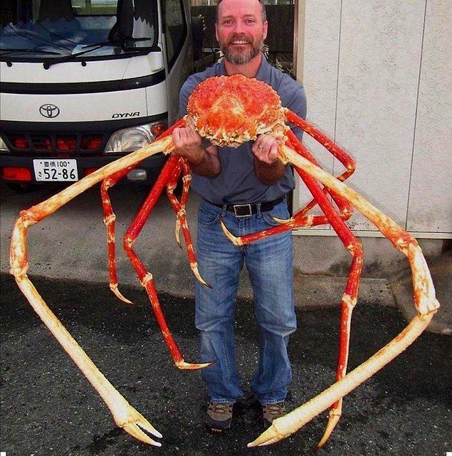 10. Japon örümcek yengeci dünyadaki en büyük yengeçtir.