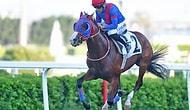 Atını Yumruklamıştı: Jokey Halis Karataş'a 60 Gün At Binmeme Cezası