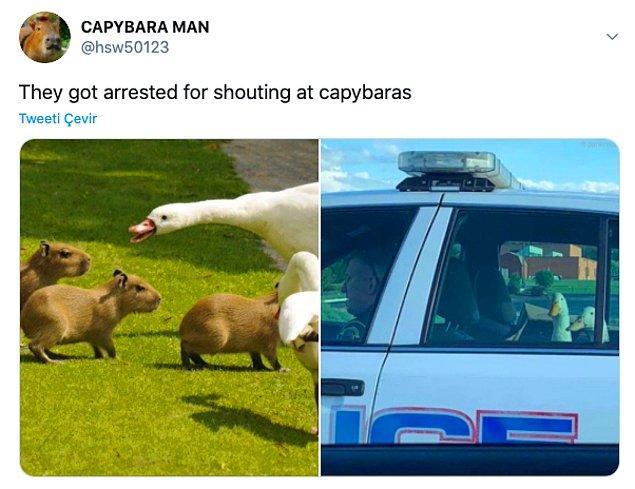 """14. """"Kapibaralara bağırdıkları için tutuklanmışlar."""""""