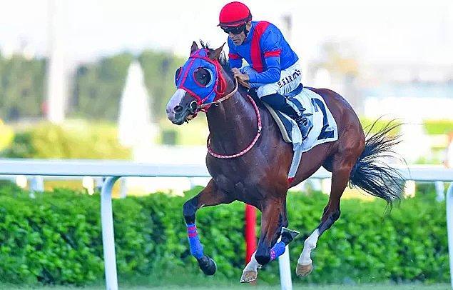 10. Türkiye'nin en ünlü jokeylerinden Halis Karataş'ın yarışta bindiği ata yumruk atması...