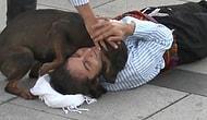 30 Ağustos Kutlamalarında Yere Yatıp Yaralı Rolü Yapan Adamın Boynuna Sarılarak Yardım Etmeye Çalışan Köpek