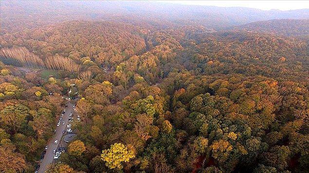 Orman alanları 1990-2020 arasında 50 bin hektar azaldı