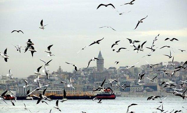 1. Tüm İstanbul Boğazı'nı esir almış martı sesleri...
