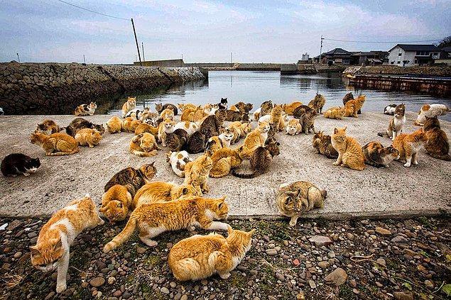6. Tashirojima Adası (Japonya)