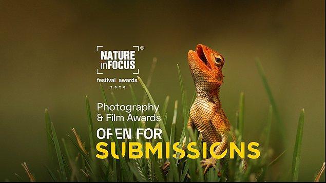Nature inFocus, Asya'dan çok sayıda fotoğrafçının katıldığı oldukça prestijli bir yarışma.