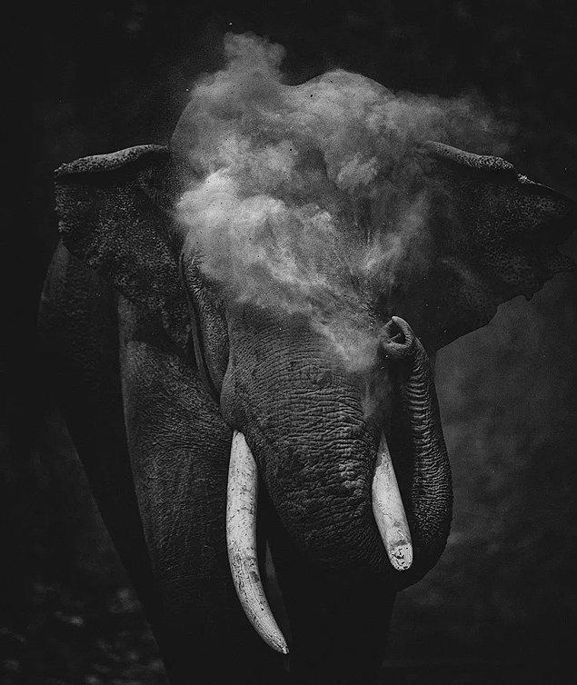 14. Genç Fotoğrafçı Kategorisi 1.'lik ödülü: 'Dust To Dust', Sitara Karthikeyan