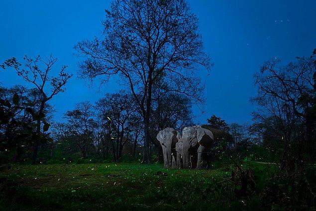 2. Yaratıcı Doğa Fotoğrafları Kategorisi 1.'lik ödülü: 'A Mirage In The Night', Nayan Jyoti Das