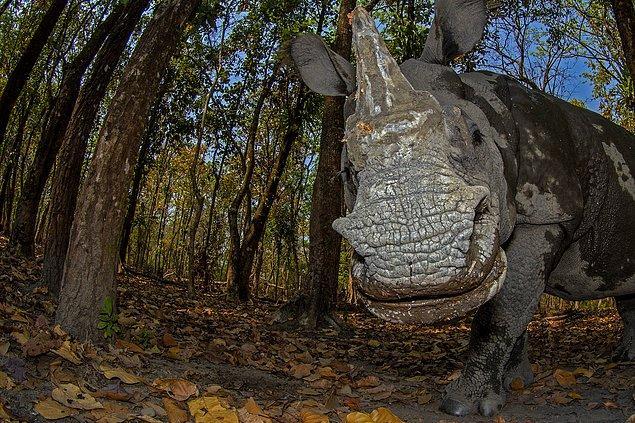 7. Hayvan Portreleri Kategorisi 3.'lük ödülü: 'Rhino's Day Out', Soumabrata Moulick