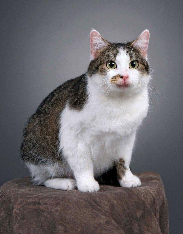 5. İlk klonlanan evcil hayvan bir kediydi, ismi de Copy Cat (Kopya Kedi) idi.