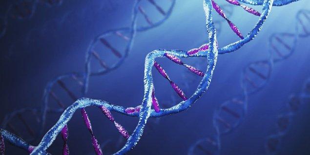 1-Genetik faktörler: