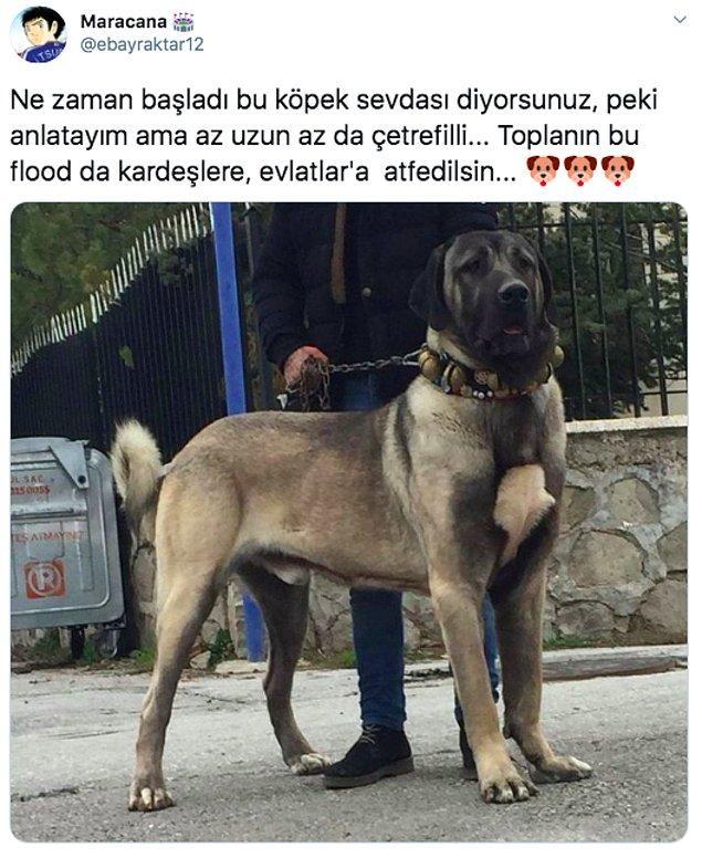 Twitter'da @ebayraktar12 adlı kişi köpeklerle arasındaki bağın nereden geldiğini anlatınca kalbimiz yumuşacık oldu. Biz de sizinle paylaşmak istedik. 😊