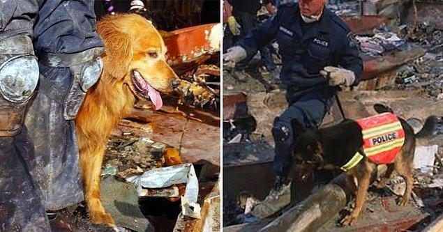 7. 300'den fazla arama kurtarma köpeğinden yardım alındı...