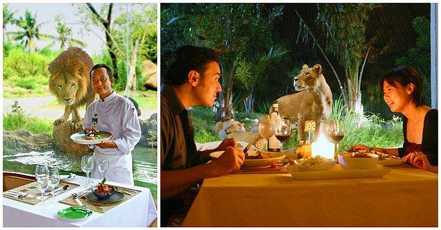 12. Tsavo Lion Restaurant, Endonezya