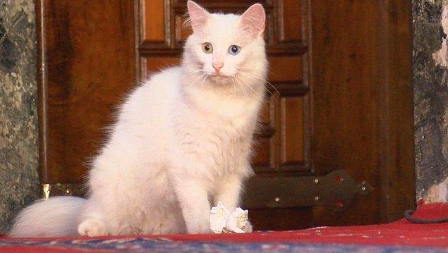 Hatta Gli'ye arkadaşlık etmesi için Ankara'dan 'Kılıç' adında bir kedi de Ayasofya'ya gönderilmişti.