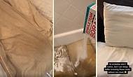 Erkek Arkadaşının 10 Yıl Boyunca Yıkamadığı Yastıkları Yıkayan Kadının Kaydettiği Mide Bulandırıcı Görüntüler