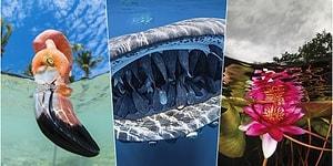 2020 Yılının Baktıkça İçinizi Açacak Tablo Gibi Duran En İyi Su Altı Fotoğrafları Açıklandı!