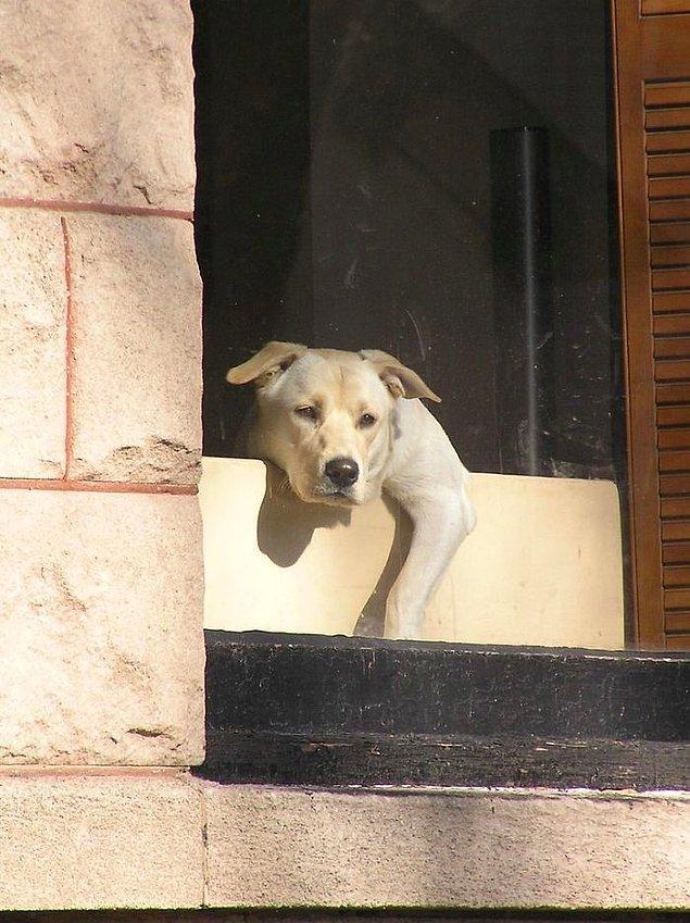 1. Birçok evcil hayvan, sahipleri beklenmedik bir şekilde öldükleri ve kimse onları kontrol etmeye gelmediği için hayatını kaybeder.
