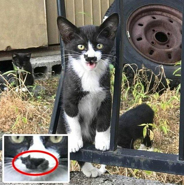 19. Kedide kedi var.