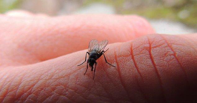 14. Ev sineklerinin ömrü 24 saat değildir. Bir ay kadar yaşayabilirler.