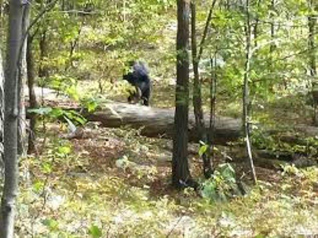 5. Bir ayıya ait bu fotoğraf, ayı tarafından öldürülmesinin ardından bir adamın telefonundan çıkmıştı.