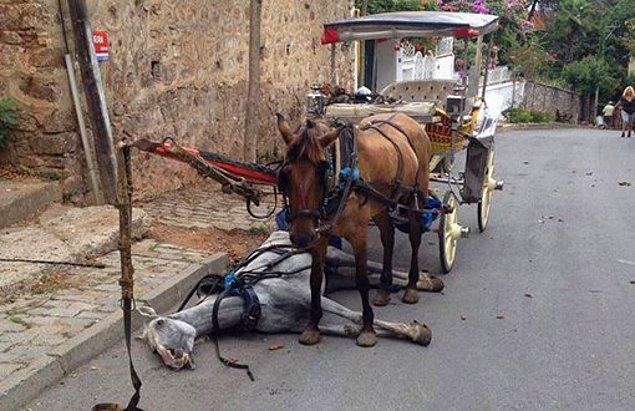 9. Faytonda çalıştırılan atın ömrü 2-3 yıl iken normal bir atın ömrü 25-30 yıl...