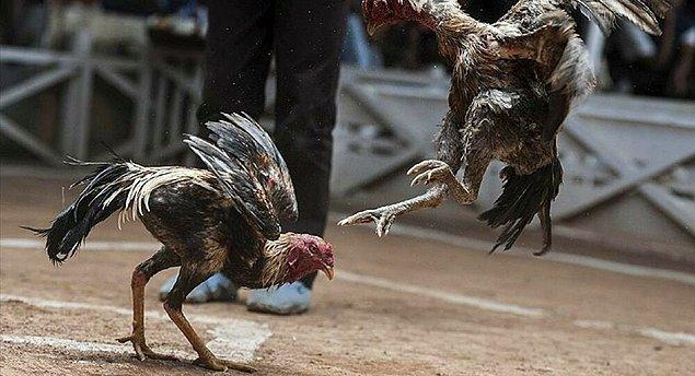 10. Hayvanların kan revan içinde kalışları izleniyor...