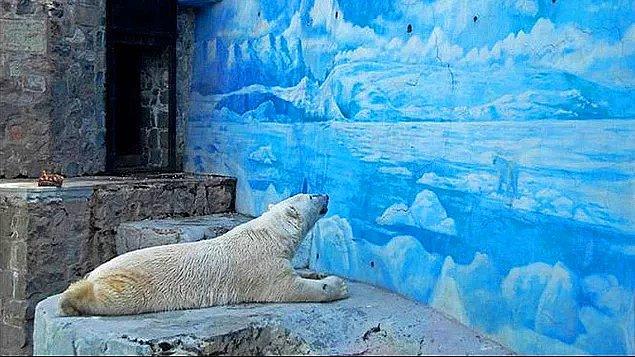 14. Hayvanat bahçelerinde fazlalık olarak görülen sağlıklı hayvanlar öldürülüyor...