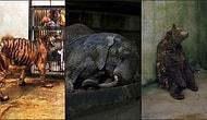 Bu Vahşete Artık Bir Dur Dememiz Gerekiyor: Hayvanat Bahçesinin Neden Hayvanların Cehennemi Olduğunun Kanıtları