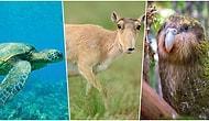 Bizden Destek Bekliyorlar! Dünyanın Farklı Yerlerinden Yaşamı Tehdit Altında Olan 9 Canlı