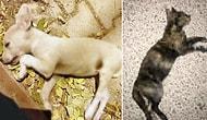 Burdur'da Çok Sayıda Sokak Hayvanı Katledildi: 'Para Cezası ile Kurtuluyorlar'