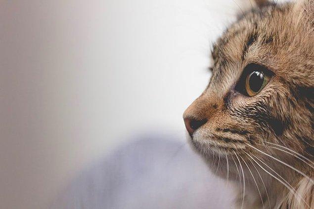 3. Kediler insanlarla iletişim kurmak için miyavlarlar. Başka kedilere miyavlamaları çok nadirdir.