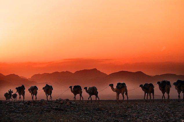 4. Suudi Arabistan develerini Avustralya'dan ithal eder.