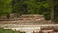 Ağaç Kestirip Villa Yaptıran Orman İşletme Müdürü Tutuklandı