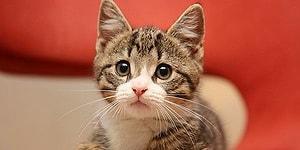 Bilinçaltın Hangi Kedi Gibi Çalışıyor?