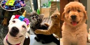 'Nasıl Başladı/Nasıl Gidiyor' Akımına Birbirinden Tatlı Evcil Hayvanları ile Katılarak Gözlerimizden Kalpler Çıkartan 17 Kişi