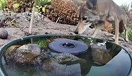 Yaban Hayvanları İçin Ormanlık Alana Kurulan Çeşme ve O Çeşmeye Kurulan Gizli Kameranın Kaydettiği Enfes Görüntüler
