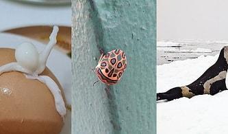 Doğamızın Gücünü ve Eşsizliğini Kanıtlar Derecede Birbirinden İlginç 19 Fotoğraf