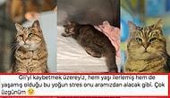 Her Milletten İnsanı Kendine Hayran Bırakan Ayasofya'nın Neşe Kaynağı Şaşı Kedi Gli Yaşam Savaşı Veriyor!