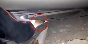 İzmir Depreminde Enkaz Altında Kalan Kediyi AFAD Ekipleri Büyük Bir Özveri ile Kurtardı