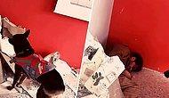 İzmir Depreminde Onlarca Hayat Kurtardılar: Arama Kurtarma Köpeği Mexx'in Tatbikat Görüntüleri
