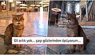 Tedavi Görüyordu... Herkesin Sevgisini Kazanan Ayasofya'nın Güzeller Güzeli Kedisi Gli Yaşamını Yitirdi